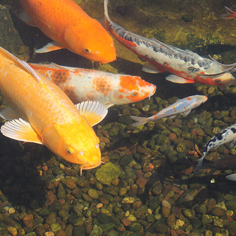 "What do you really mean when you say fish are ""dormant"" for the winter? Do they sleep?"